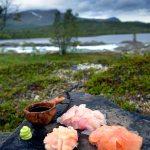 Wildnis_Sushi