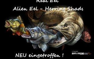 Real Eel - Alien Eel - Herring Shads