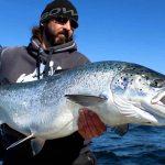 Imposante Fische in einem atemberaubenden Revier
