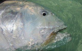 Fliegenfischen auf den SEYCHELLEN (neue Destination)!
