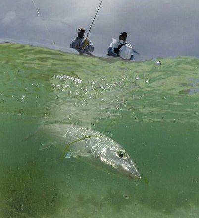 Fliegenfischen in Los Roques, Venezuela: Kundenfeedback